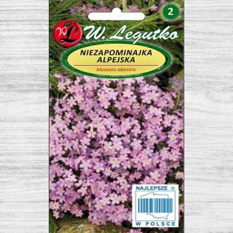 Floare de nu mă uitar roz Legutko imagine 4