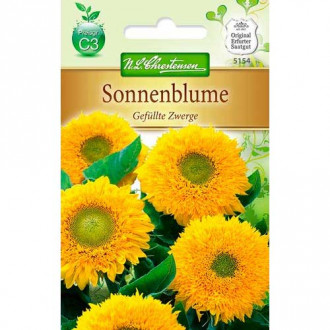 Floare soarelui decorativă pitică Chrestensen imagine 8