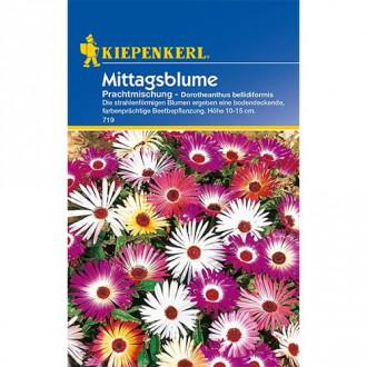 Floarea de gheaţă Kiepenkerl imagine 8