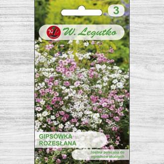 Floarea miresei (Gypsophila) mix multicolor Legutko imagine 2
