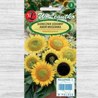 Floarea soarelui decorativă Amor Legutko imagine 6