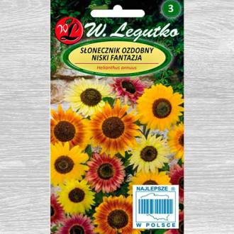 Floarea soarelui decorativă Fantasia, mix multicolor Legutko imagine 5