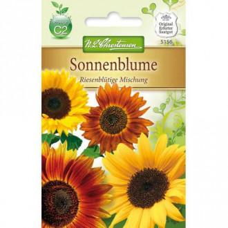 Floarea soarelui decorativă gigant, mix multicolor Chrestensen imagine 8