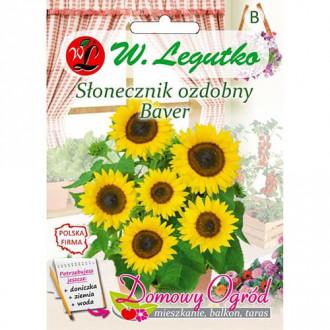 Florea soarelui decorativă Baver Legutko imagine 1