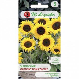 Floarea soarelui decorativă Polino Cola Legutko imagine 2
