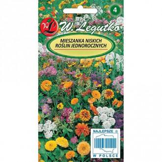 Flori anuale, mix multicolor 2 Legutko imagine 3