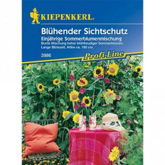 Flori anule pentru gard viu Kiepenkerl imagine 6