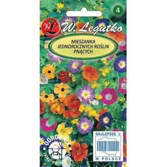 Flori cățărătoare, mix multicolor Legutko imagine 2