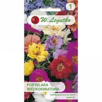 Flori de piatră, mix multicolor Legutko imagine 5