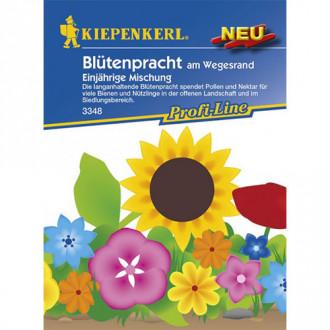 Flori de vară, mix multicolor Kiepenkerl imagine 8