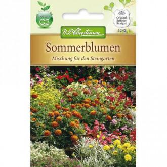 Flori de vară pentru stâncării, mix multicolor Chrestensen imagine 1