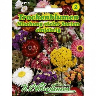 Flori de vară pentru uscare, mix multicolor Chrestensen imagine 6