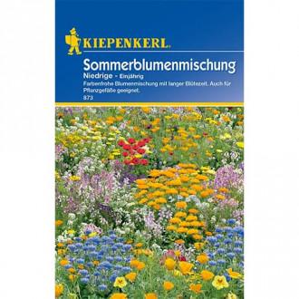 Flori de vară pitice, mix multicolor Kiepenkerl imagine 2