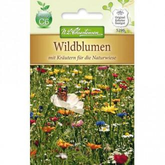 Flori și ierburi sălbatice, mix multicolor Chrestensen imagine 1
