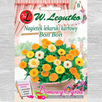 Gălbenele Bon Bon, mix multicolor Legutko imagine 1