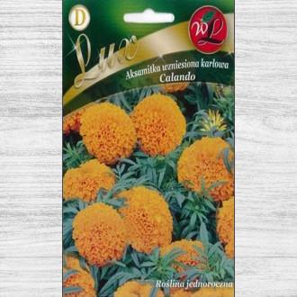 Gălbenele Calando portocalii Legutko imagine 6