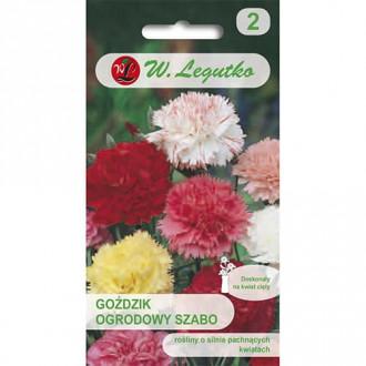 Garoafă de grădină Szabo, mix multicolor Legutko imagine 1