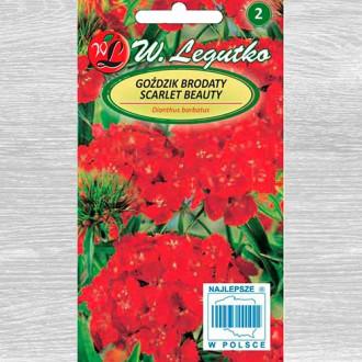Garoafă turcească Scarlet Beauty Legutko imagine 3