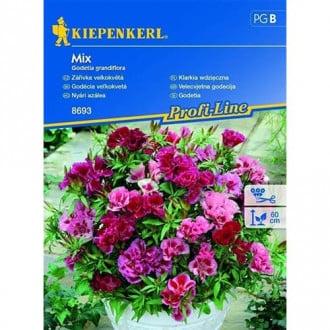 Godetia, mix multicolor Legutko imagine 1