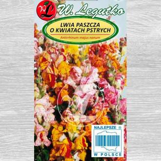Gura leului pitică Tutti Frutti, mix multicolor Legutko imagine 2