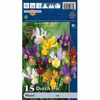 Iris olandez mix multicolor imagine 7