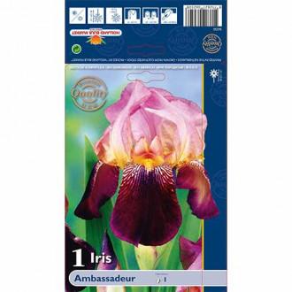 Iris germanica (Stânjenel) Ambassadeur imagine 8