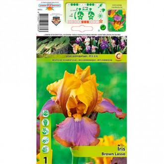 Iris germanica (Stânjenel) Brown Lasso imagine 3