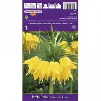 Lalea imperială (Fritillaria) Lutea imagine 4