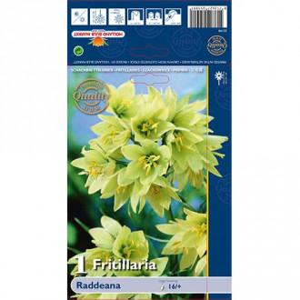 Lalea imperială (Fritillaria) Raddeana imagine 8