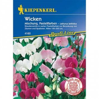 Lathyrus latifolius (Măzăriche) Pastell, mix multicolor Kiepenkerl imagine 7