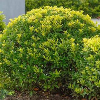Laur Green Lustre imagine 4