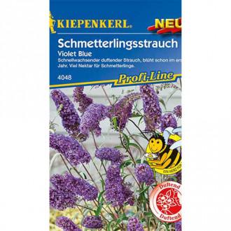 Liliac de vară Violet Blue Kiepenkerl imagine 4