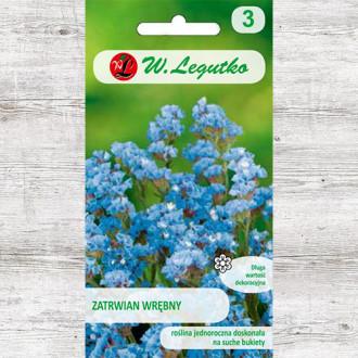 Limonium sinuatum (Sărăturică) albastru Legutko imagine 6