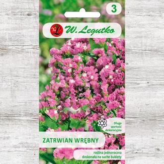 Limonium sinuatum (Sărăturică) roz Legutko imagine 8