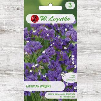 Limonium sinuatum (Sărăturică violet Legutko imagine 4