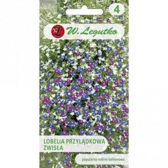 Lobelia curgătoare de ghiveci, mix multicolor Legutko imagine 5