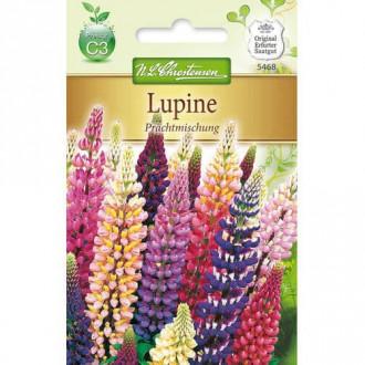Lupin cu flori mari, mix multicolor Chrestensen imagine 4