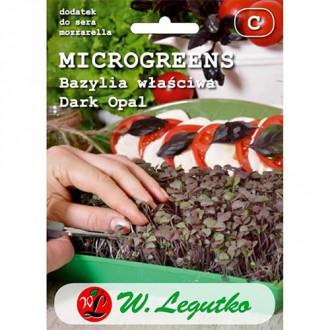 Microplante - Busuioc Dark Opal Legutko imagine 8