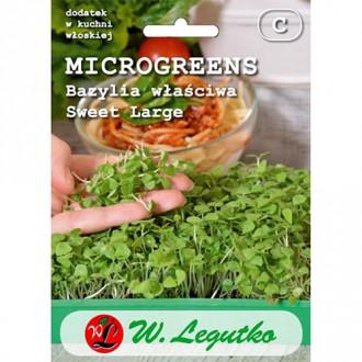 Microplante - Busuioc Sweet Large Legutko imagine 8