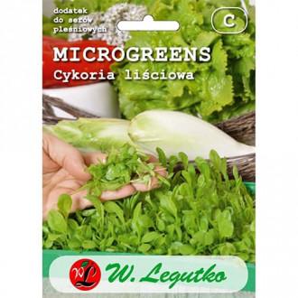 Microplante - Cicoare Legutko imagine 1