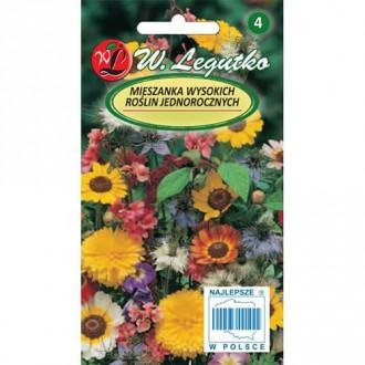 Mimoză roz Legutko imagine 1