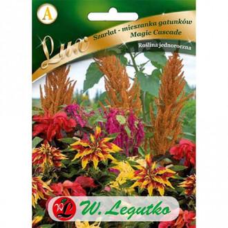 Moțul curcanului (Amaranthus) Magic Cascade Legutko imagine 1
