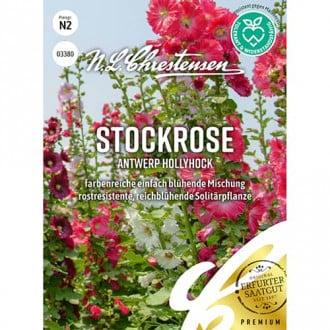 Nalbă de grădină Antwerp Hollyhock Chrestensen imagine 5