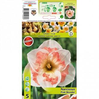 Narcise Pink Wonder imagine 6