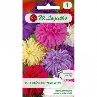 Ochiul boului tip crizantemă, mix multicolor Legutko imagine 8