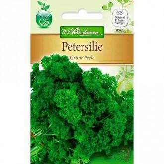 Pătrunjel de frunze Green Pearl Chrestensen imagine 6