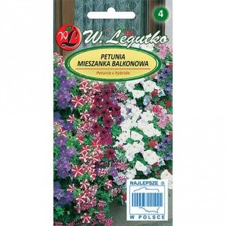 Petunie pentru balcon, mix multicolor Legutko imagine 2