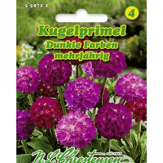 Primula Dark Colors, mix multicolor Chrestensen imagine 1