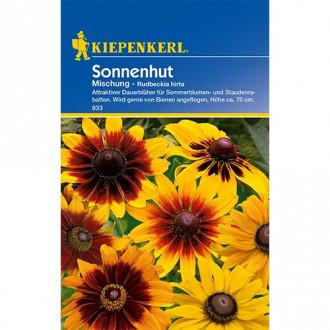 Rudbeckia (Bulgări de soare) mix multicolor Kiepenkerl imagine 2