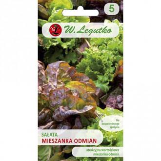 Salată, amestec de soiuri Legutko imagine 3